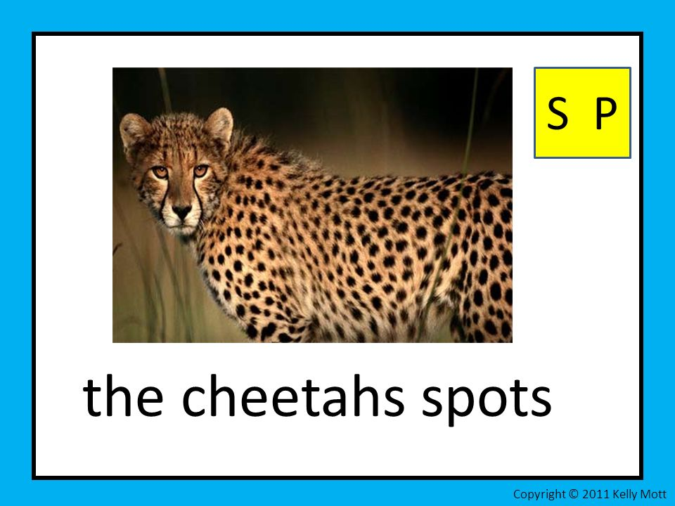 the cheetahs spots S P Copyright © 2011 Kelly Mott