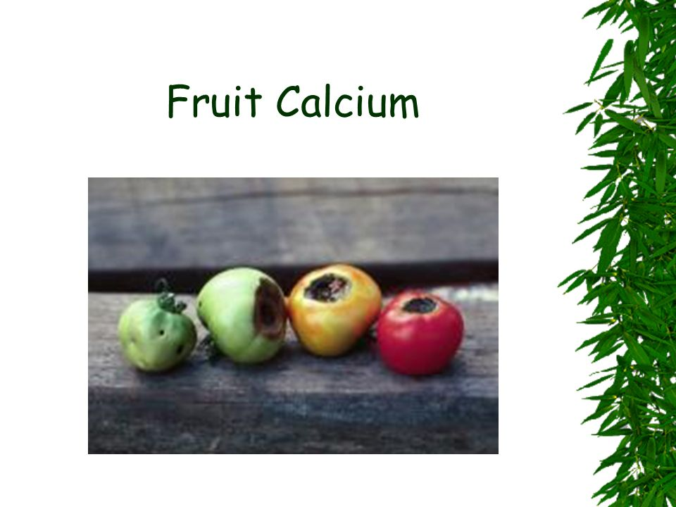 Fruit Calcium