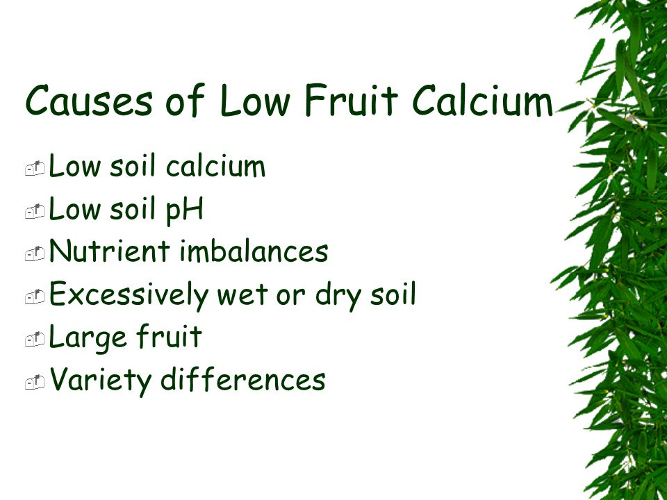 Causes of Low Fruit Calcium Low soil calcium Low soil pH Nutrient imbalances Excessively wet or dry soil Large fruit Variety differences