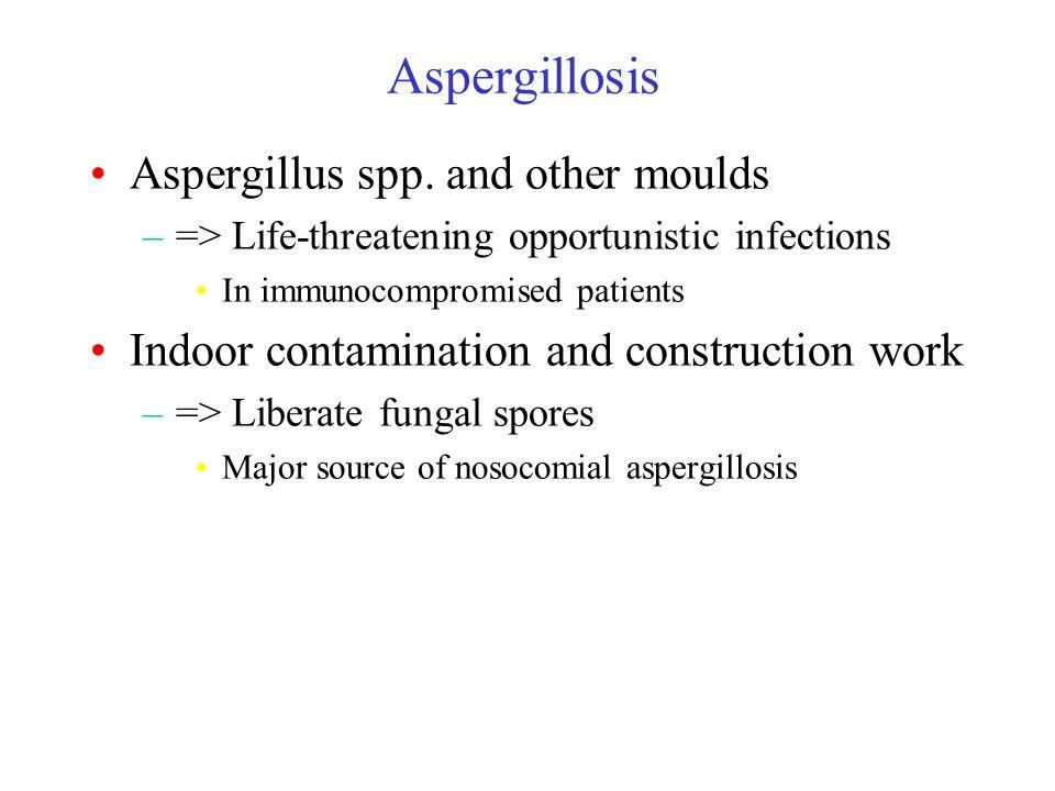 Aspergillosis Aspergillus spp.