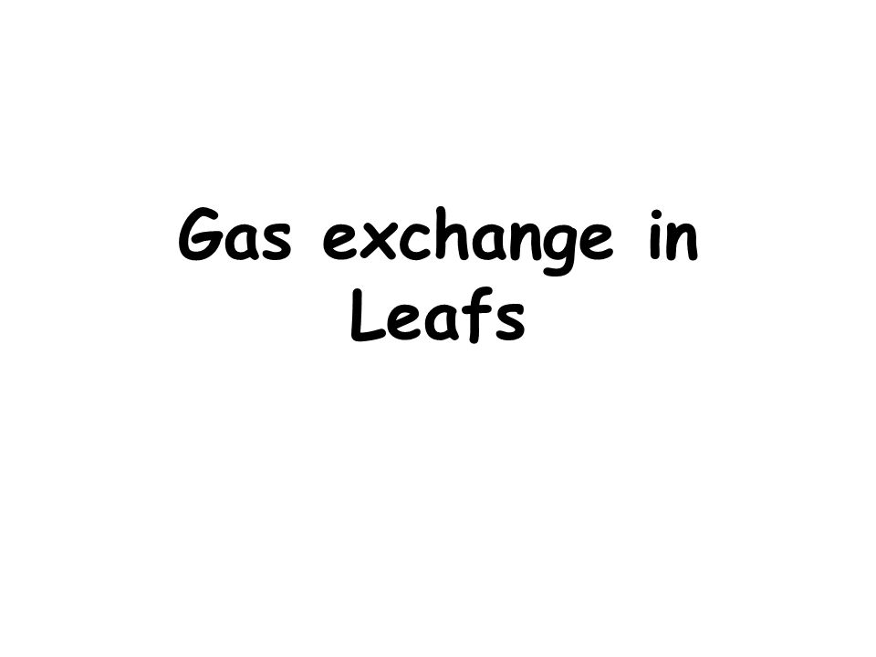 Gas exchange in Leafs