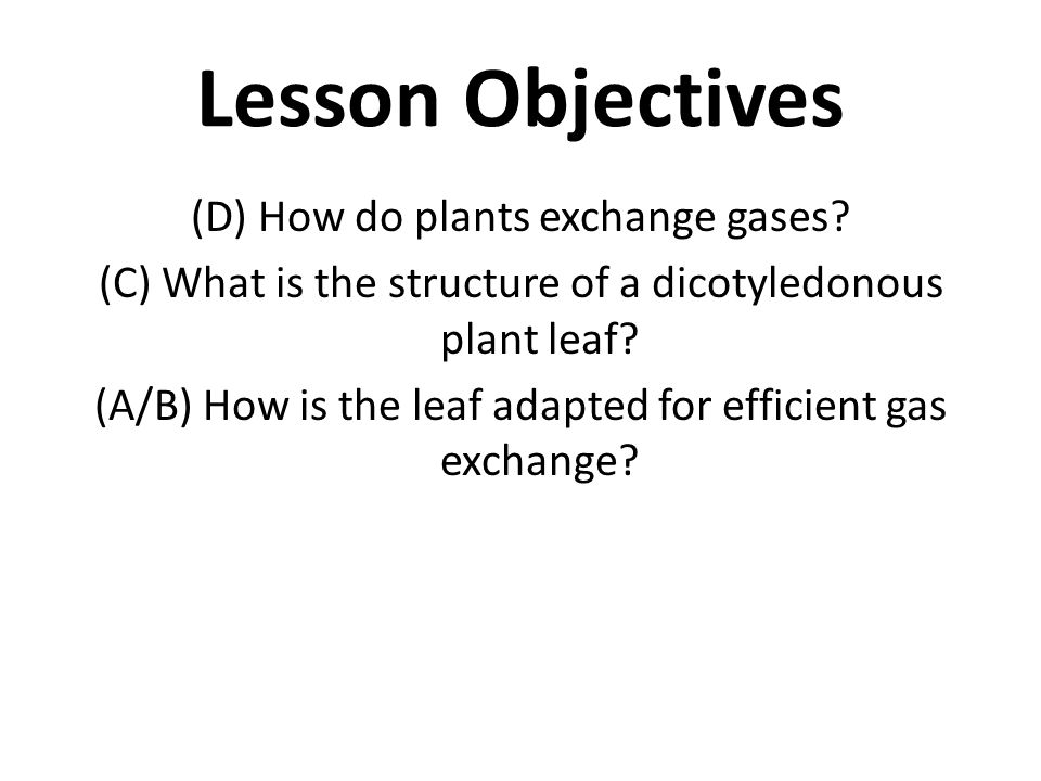 Lesson Objectives (D) How do plants exchange gases? (C) What is the structure of a dicotyledonous plant leaf? (A/B) How is the leaf adapted for effici