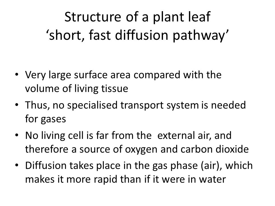 Structure of a plant leaf short, fast diffusion pathway Very large surface area compared with the volume of living tissue Thus, no specialised transpo