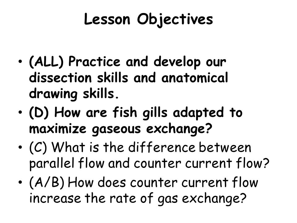 Lesson Objectives (ALL) Practice and develop our dissection skills and anatomical drawing skills. (D) How are fish gills adapted to maximize gaseous e