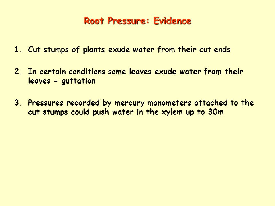 Root Pressure: Evidence 1.Cut stumps of plants exude water from their cut ends 2.In certain conditions some leaves exude water from their leaves = gut