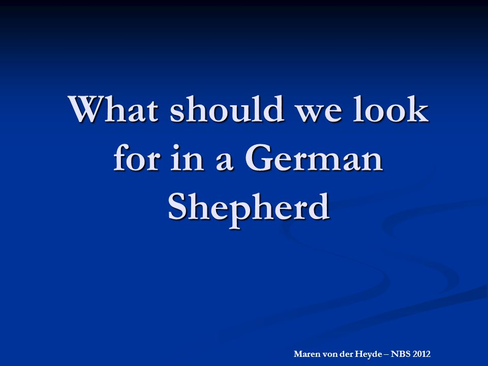 What should we look for in a German Shepherd Maren von der Heyde – NBS 2012