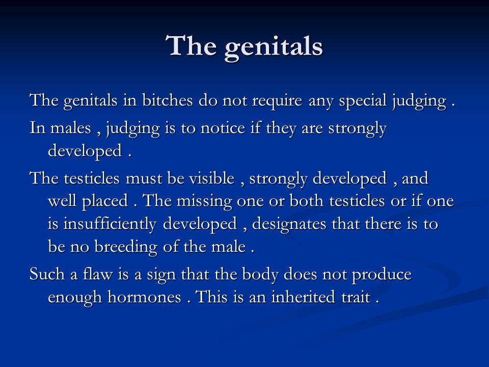 The genitals The genitals in bitches do not require any special judging. In males, judging is to notice if they are strongly developed. The testicles