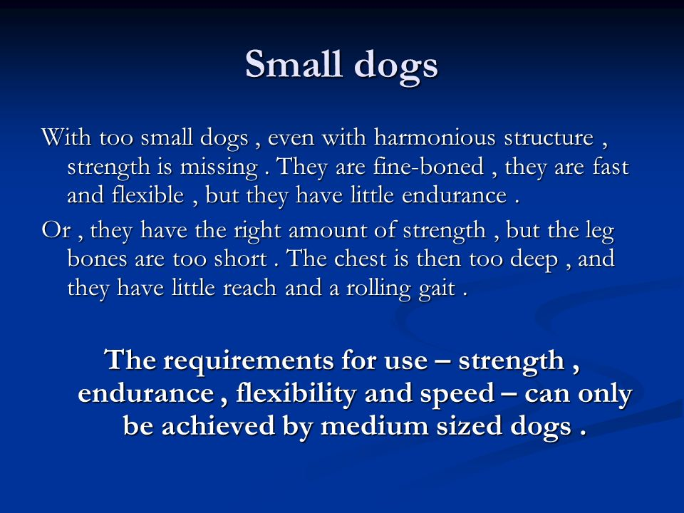 Small dogs With too small dogs, even with harmonious structure, strength is missing. They are fine-boned, they are fast and flexible, but they have li