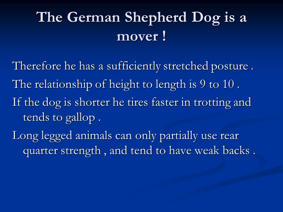 The German Shepherd Dog is a mover ! Therefore he has a sufficiently stretched posture. The relationship of height to length is 9 to 10. If the dog is