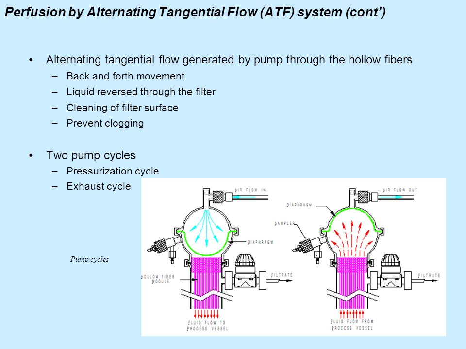 Perfusion by Alternating Tangential Flow (ATF) system (cont) Alternating tangential flow generated by pump through the hollow fibers –Back and forth m