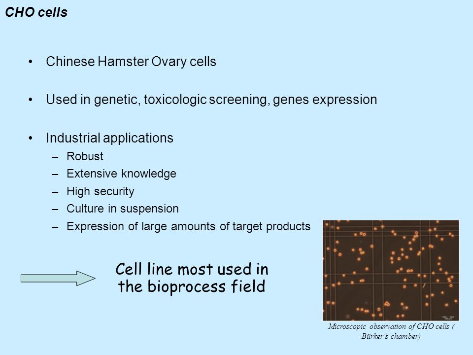 CHO cells Chinese Hamster Ovary cells Used in genetic, toxicologic screening, genes expression Industrial applications –Robust –Extensive knowledge –H