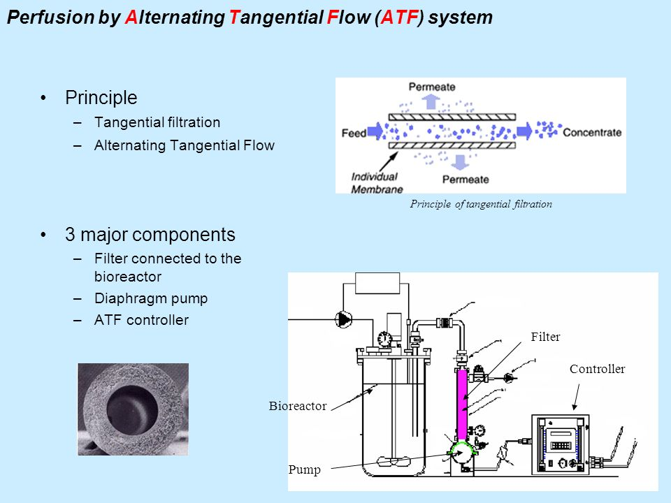 Perfusion by Alternating Tangential Flow (ATF) system Principle –Tangential filtration –Alternating Tangential Flow 3 major components –Filter connect