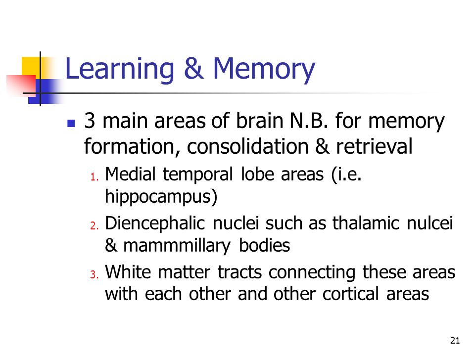 21 Learning & Memory 3 main areas of brain N.B. for memory formation, consolidation & retrieval 1. Medial temporal lobe areas (i.e. hippocampus) 2. Di