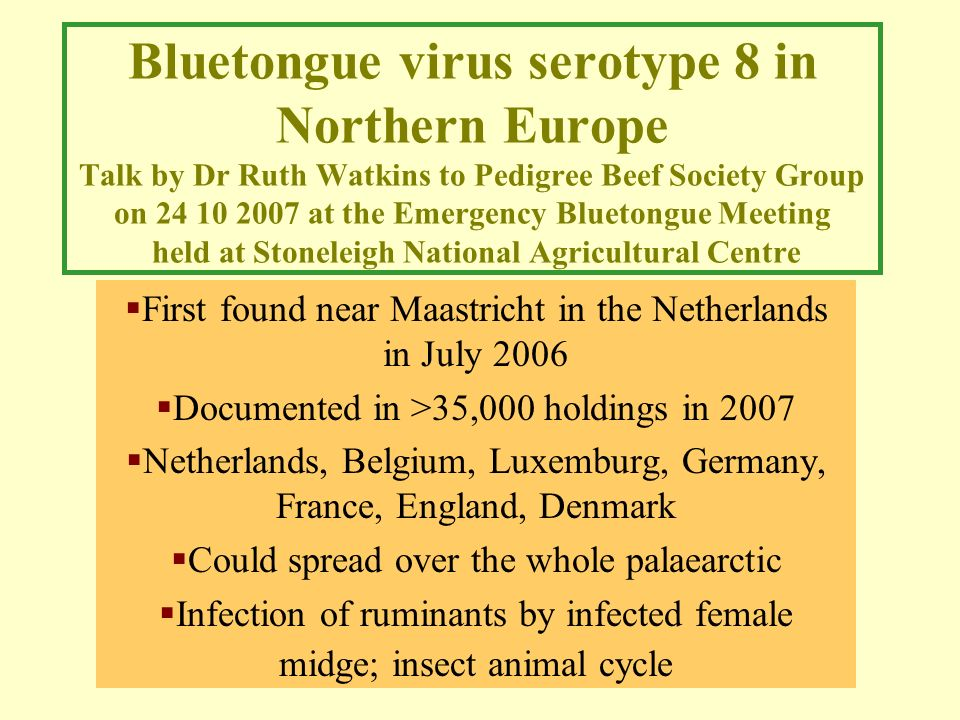 Bluetongue virus serotype 8 in Northern Europe Talk by Dr Ruth Watkins to Pedigree Beef Society Group on 24 10 2007 at the Emergency Bluetongue Meeting held at Stoneleigh National Agricultural Centre First found near Maastricht in the Netherlands in July 2006 Documented in >35,000 holdings in 2007 Netherlands, Belgium, Luxemburg, Germany, France, England, Denmark Could spread over the whole palaearctic Infection of ruminants by infected female midge; insect animal cycle