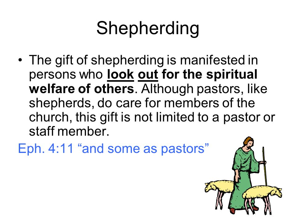 Shepherding The gift of shepherding is manifested in persons who look out for the spiritual welfare of others.