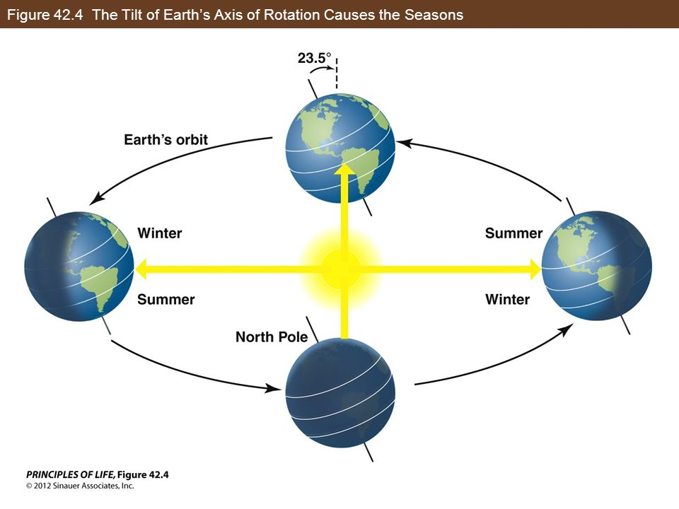 Figure 42.4 The Tilt of Earths Axis of Rotation Causes the Seasons