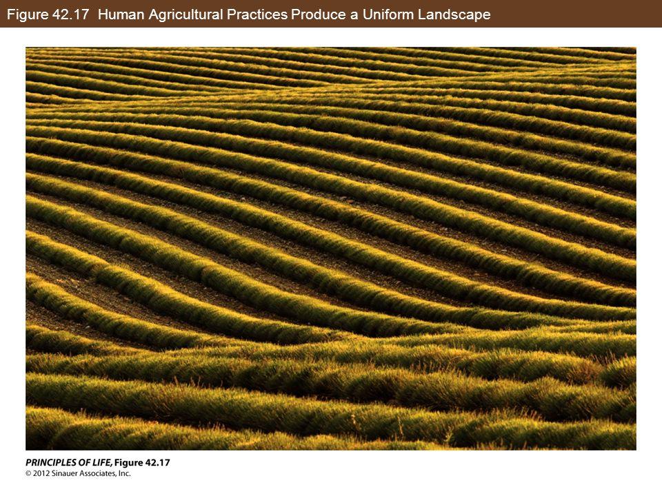 Figure 42.17 Human Agricultural Practices Produce a Uniform Landscape