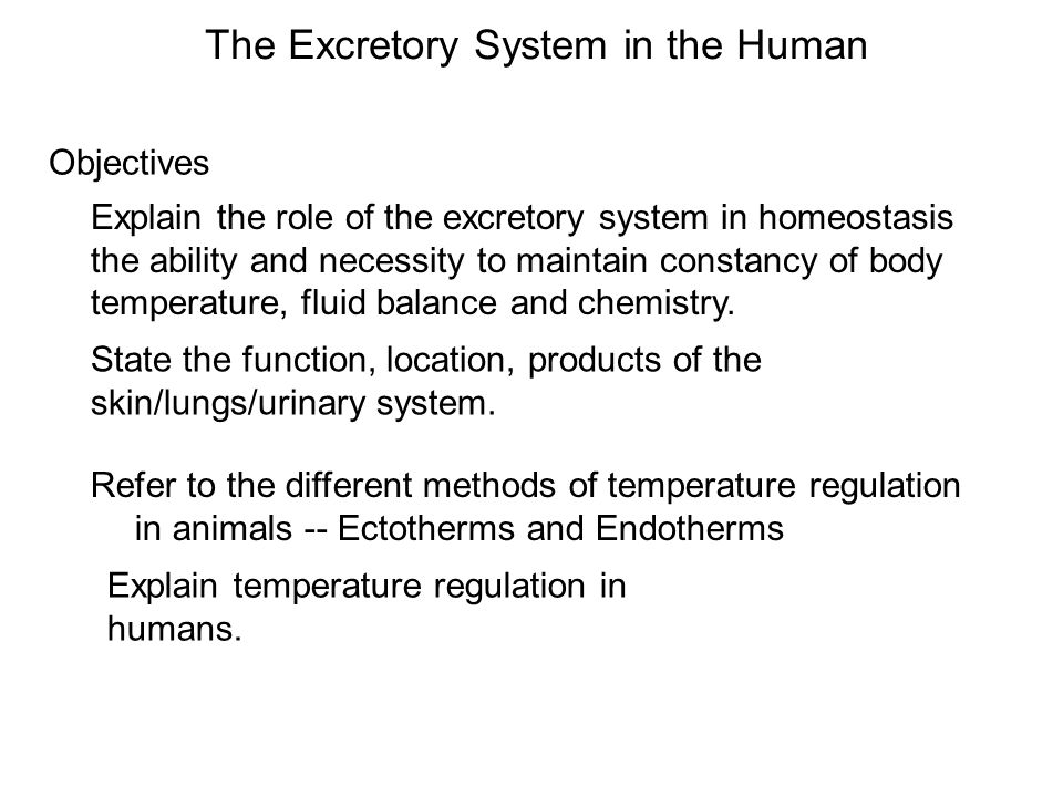 Objectives The Excretory System in the Human Explain the role of the excretory system in homeostasis the ability and necessity to maintain constancy o