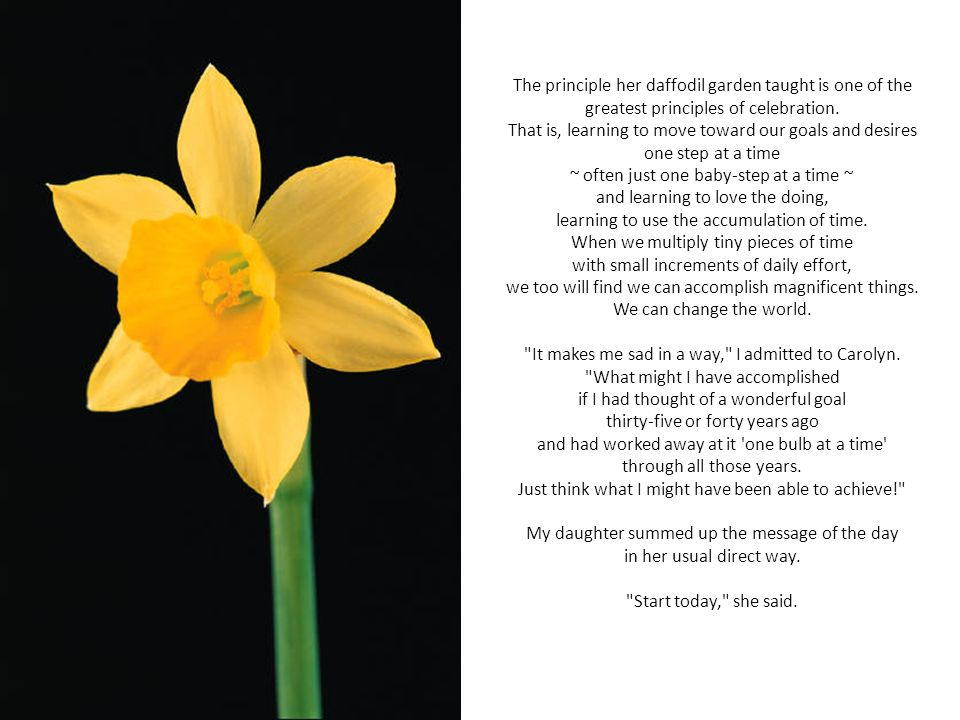 The principle her daffodil garden taught is one of the greatest principles of celebration.
