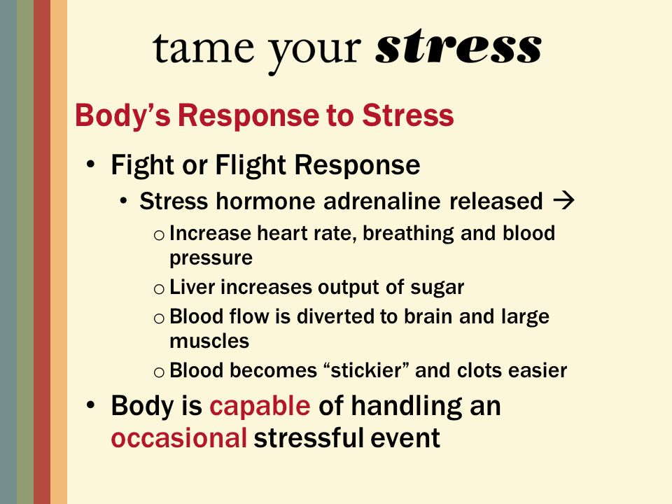 Fight or Flight Response Stress hormone adrenaline released o Increase heart rate, breathing and blood pressure o Liver increases output of sugar o Blood flow is diverted to brain and large muscles o Blood becomes stickier and clots easier Body is capable of handling an occasional stressful event Bodys Response to Stress