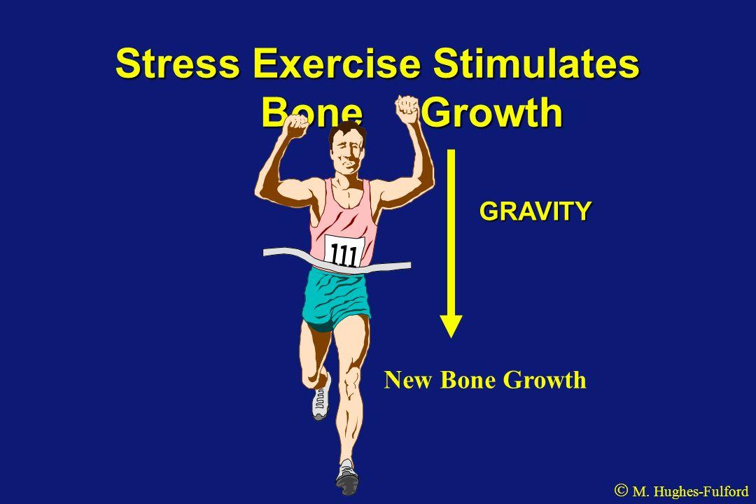 Stress Exercise Stimulates Bone Growth GRAVITY New Bone Growth M. Hughes-Fulford