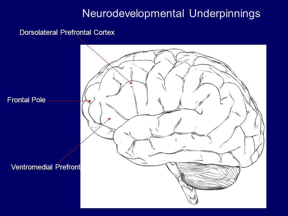 Dorsolateral Prefrontal Cortex Ventromedial Prefrontal Cortex Frontal Pole Neurodevelopmental Underpinnings