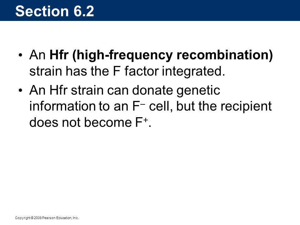 Copyright © 2009 Pearson Education, Inc. Section 6.2 An Hfr (high-frequency recombination) strain has the F factor integrated. An Hfr strain can donat