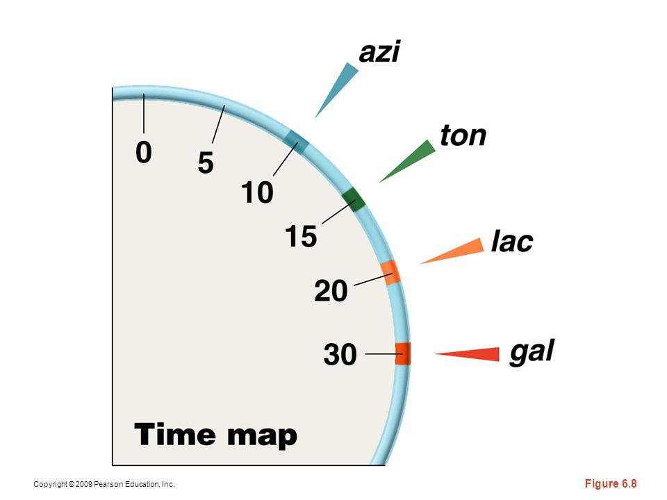 Copyright © 2009 Pearson Education, Inc. Figure 6.8
