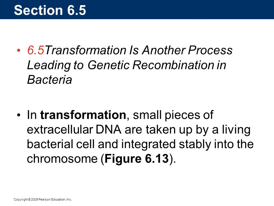 Copyright © 2009 Pearson Education, Inc. Section 6.5 6.5Transformation Is Another Process Leading to Genetic Recombination in Bacteria In transformati