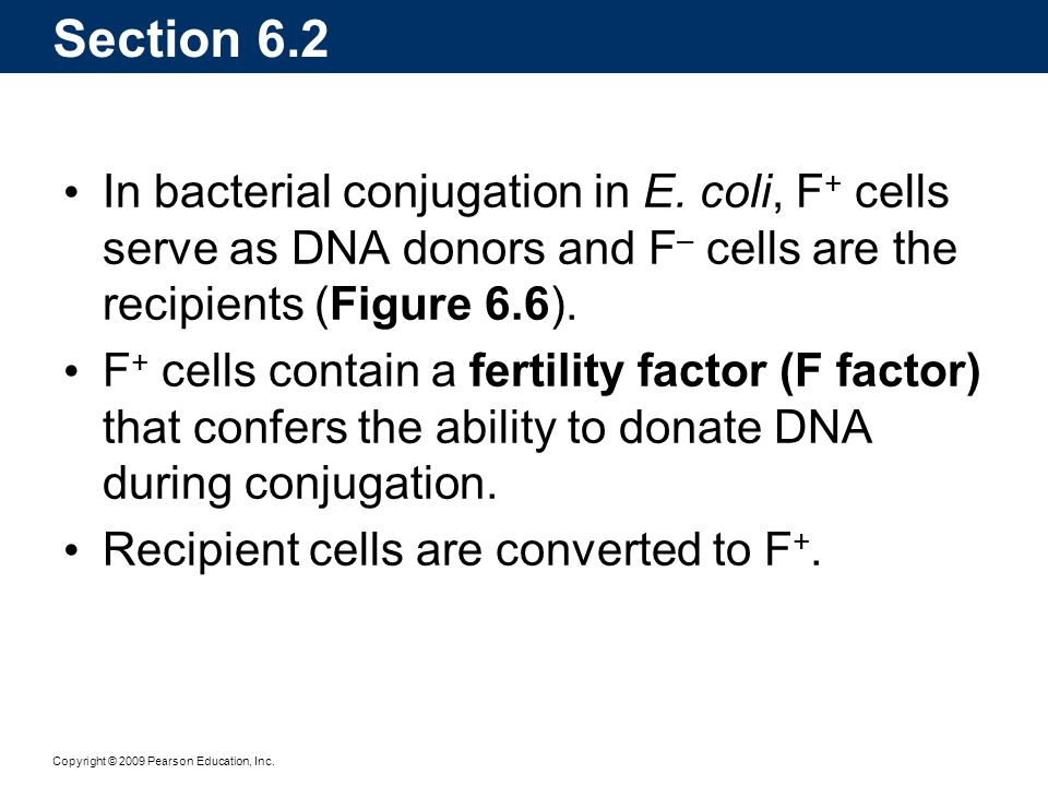 Copyright © 2009 Pearson Education, Inc. Section 6.2 In bacterial conjugation in E. coli, F + cells serve as DNA donors and F – cells are the recipien