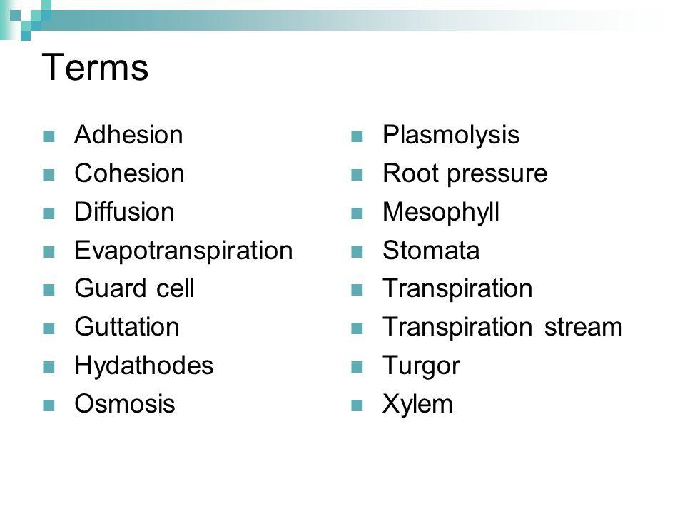 Terms Adhesion Cohesion Diffusion Evapotranspiration Guard cell Guttation Hydathodes Osmosis Plasmolysis Root pressure Mesophyll Stomata Transpiration