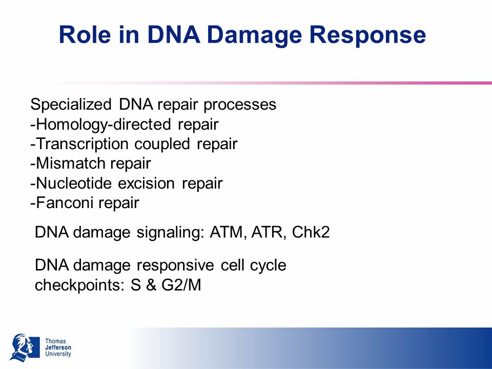 Role in DNA Damage Response Specialized DNA repair processes -Homology-directed repair -Transcription coupled repair -Mismatch repair -Nucleotide excision repair -Fanconi repair DNA damage signaling: ATM, ATR, Chk2 DNA damage responsive cell cycle checkpoints: S & G2/M