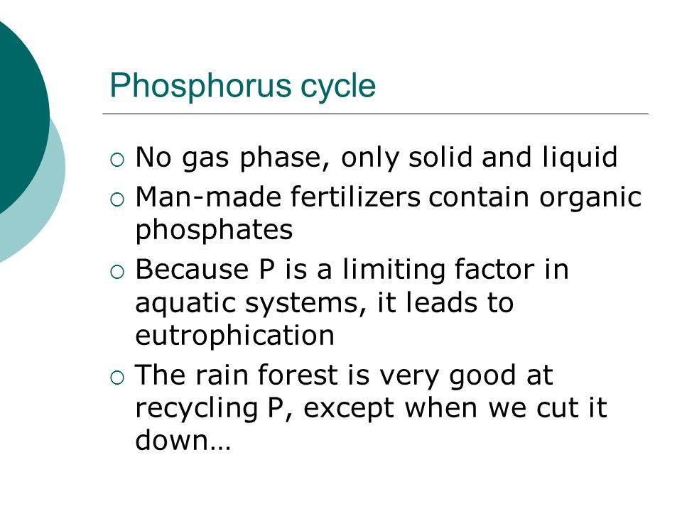 Phosphorus cycle No gas phase, only solid and liquid Man-made fertilizers contain organic phosphates Because P is a limiting factor in aquatic systems