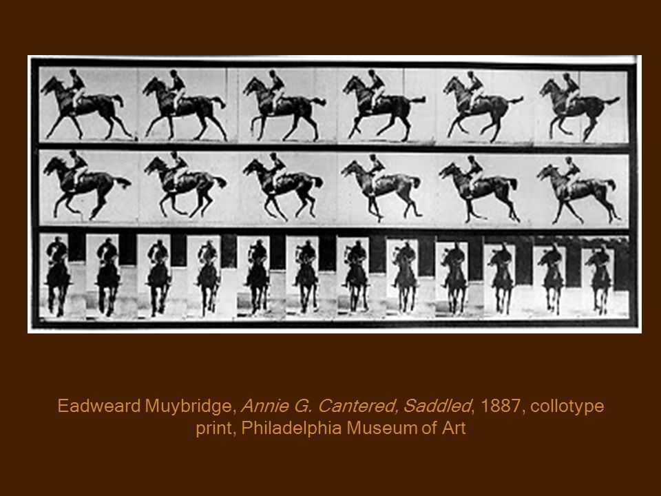 Eadweard Muybridge, Annie G. Cantered, Saddled, 1887, collotype print, Philadelphia Museum of Art