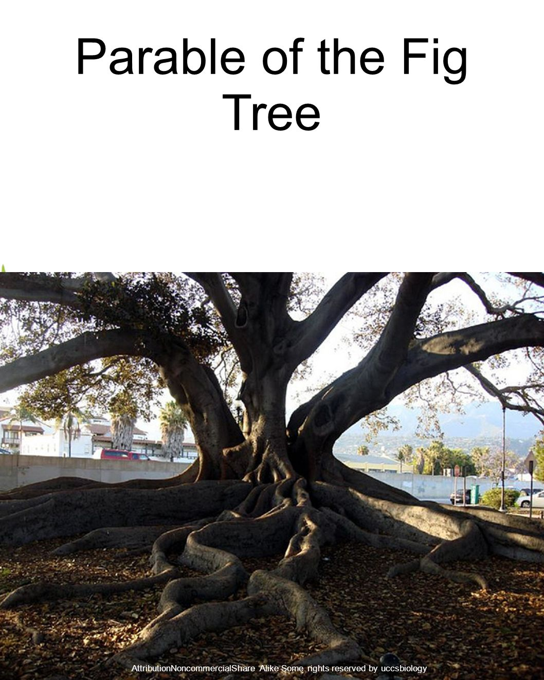 Parable of the Fig Tree AttributionNoncommercialShare Alike Some rights reserved by uccsbiology