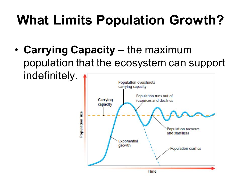 What Limits Population Growth? Carrying Capacity – the maximum population that the ecosystem can support indefinitely.