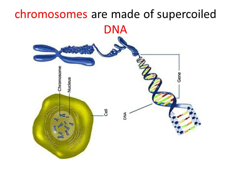 DNA (DeoxyriboNucleic Acid) structure discovered in 1953 by James Watson and Francis Crick Watson, Crick and Maurice Wilkins won the Nobel Prize in 1962