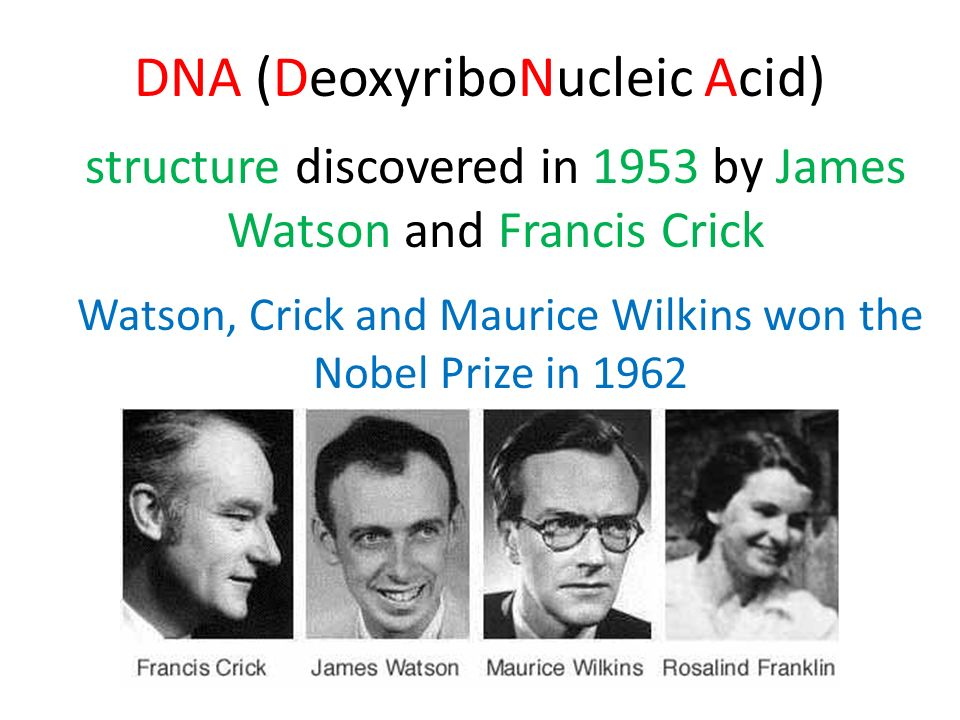 DNA (DeoxyriboNucleic Acid) structure discovered in 1953 by James Watson and Francis Crick Watson, Crick and Maurice Wilkins won the Nobel Prize in 19
