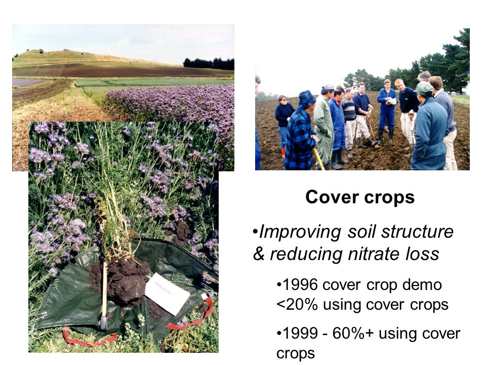 Market Gardening Cover crops Improving soil structure & reducing nitrate loss 1996 cover crop demo <20% using cover crops 1999 - 60%+ using cover crop
