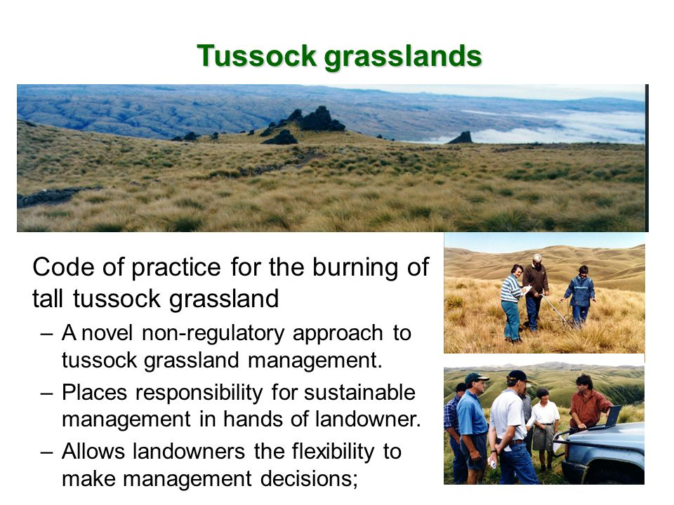 Tussock grasslands Code of practice for the burning of tall tussock grassland –A novel non-regulatory approach to tussock grassland management. –Place