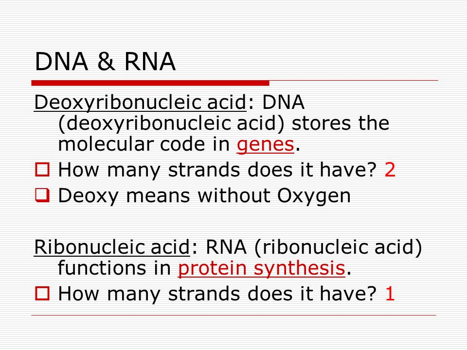 DNA & RNA Deoxyribonucleic acid: DNA (deoxyribonucleic acid) stores the molecular code in genes. How many strands does it have? 2 Deoxy means without