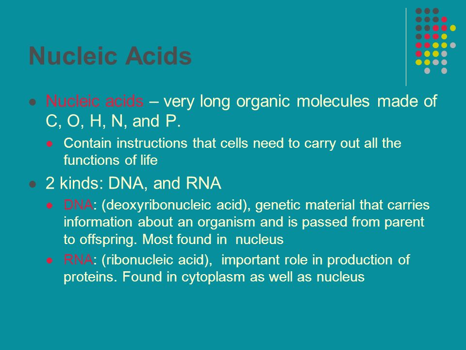 Nucleic Acids Nucleic acids – very long organic molecules made of C, O, H, N, and P. Contain instructions that cells need to carry out all the functio