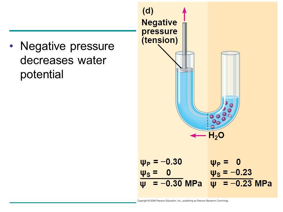 Negative pressure decreases water potential (d) Negative pressure (tension) H2OH2O ψ P = 0.30 ψ S = ψ P = ψ S = 0.23 ψ = 0.30 MPaψ = 0.23 MPa 0 0