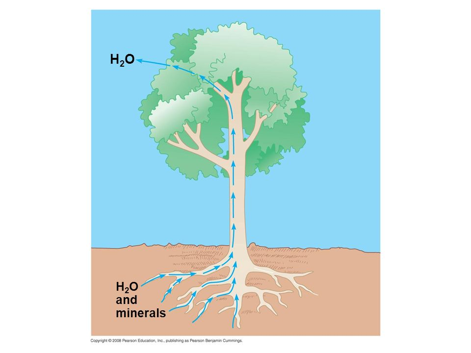 H2OH2O H 2 O and minerals