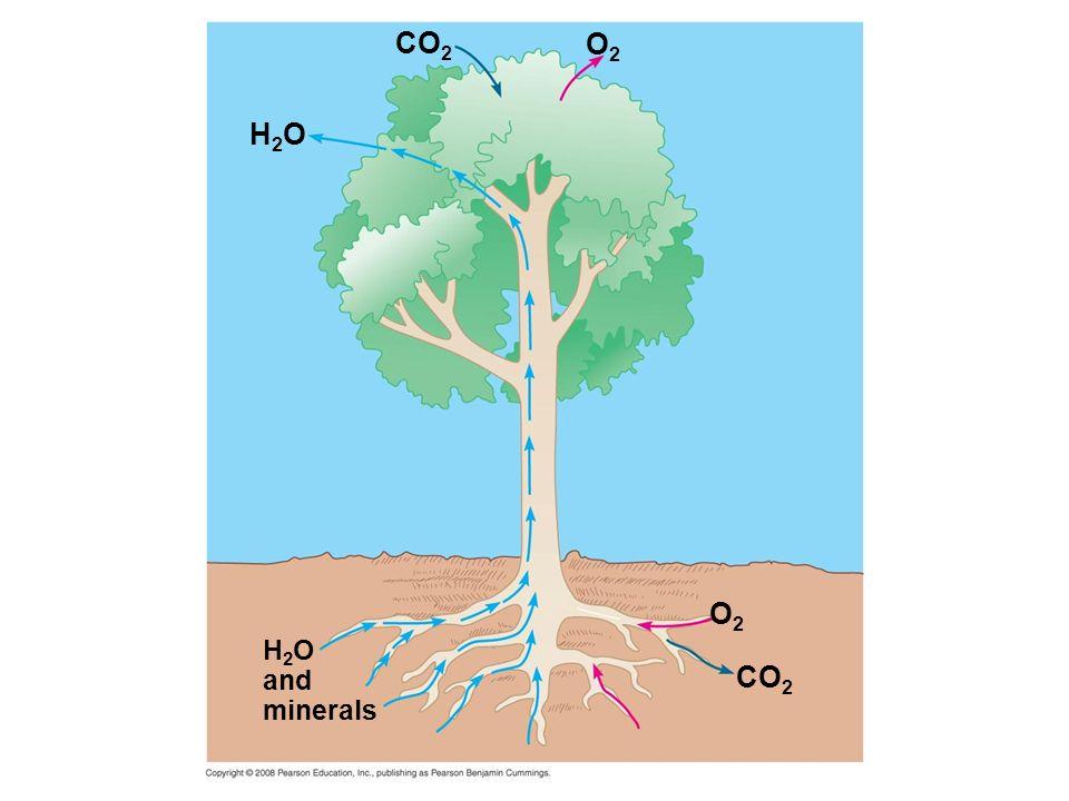H2OH2O CO 2 O2O2 O2O2