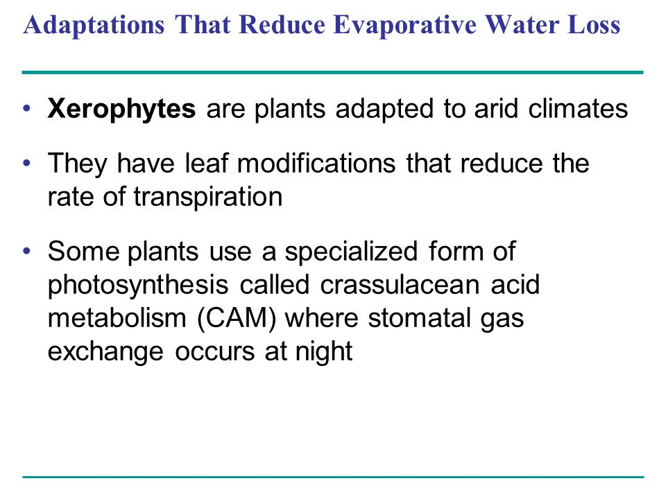 Adaptations That Reduce Evaporative Water Loss Xerophytes are plants adapted to arid climates They have leaf modifications that reduce the rate of tra