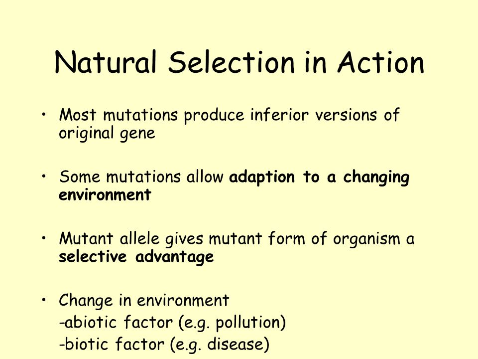 Natural Selection in Action Higher Biology