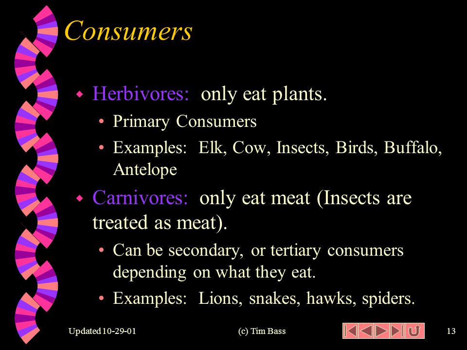 Updated (c) Tim Bass12 Consumer Overview: Producers Primary Consumers Secondary Consumers Tertiary Consumers