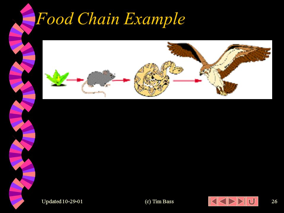 Updated (c) Tim Bass25 Food Chain w Food Chain: a series of different organisms that transfer food between the trophic levels of an ecosystem.