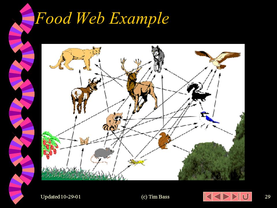 Updated (c) Tim Bass28 Food Web w Food Web: a network of food chains representing the feeding relationships among the organisms.